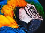 Macaw Rework
