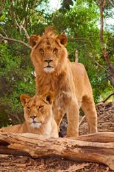 Werribee Lions