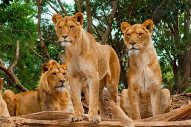 Werribee Lions 2
