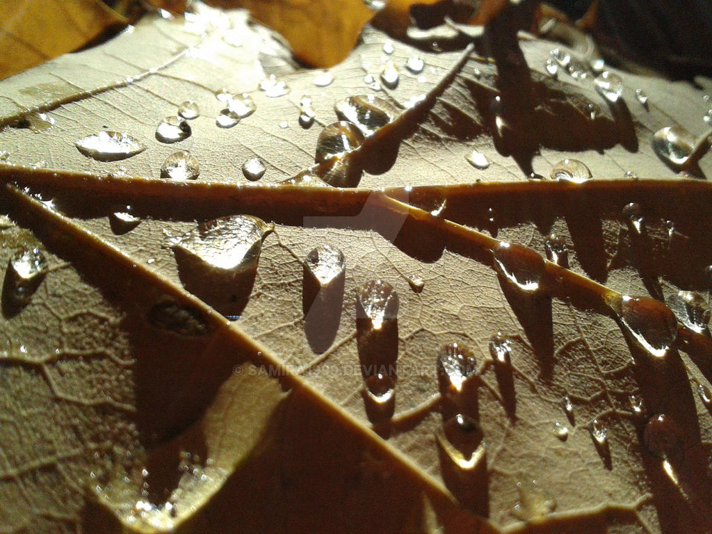 waterdrops by Samira1999