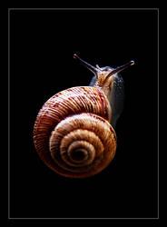 snail by DenizDayangac