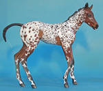 Monster Foal Camilla to baby bay appaloosa
