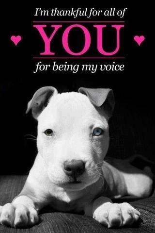 Thank You For Being My Voice by Italian-Pitbull