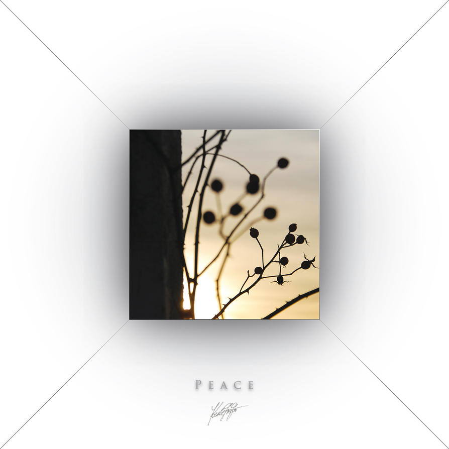 _T-E-S-T-III_ by GregorKerle