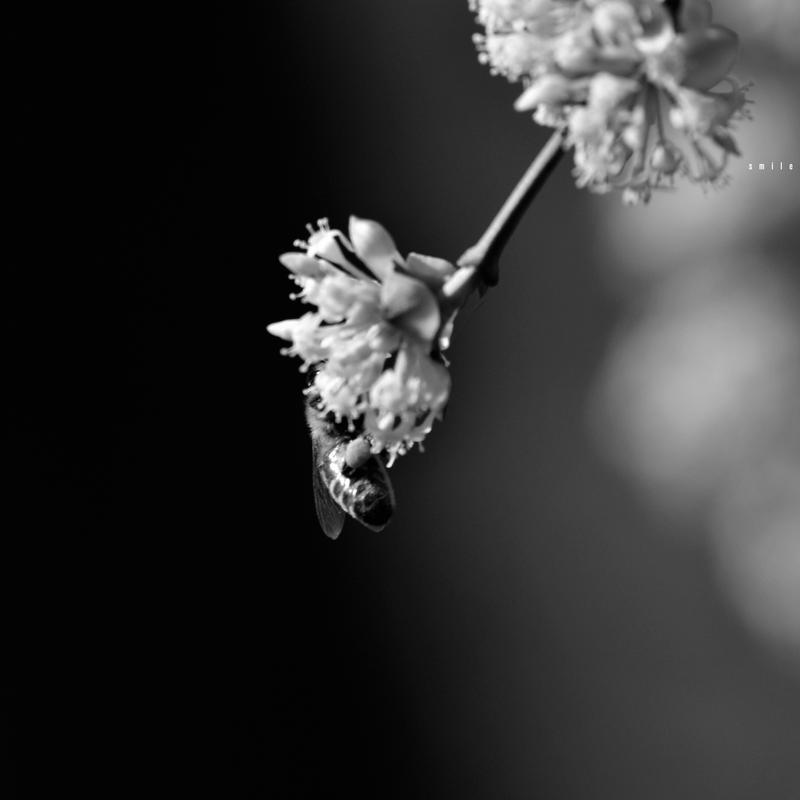 _SMiLE 16 by GregorKerle