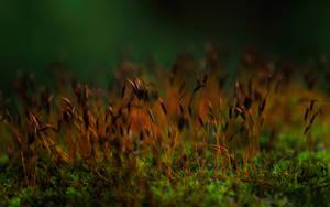 Dreamland 35WP by GregorKerle
