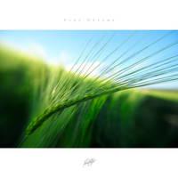 Pure Dreams 04 by GregorKerle
