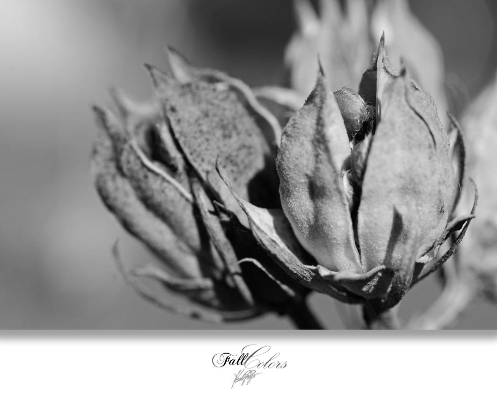FallColors 04 by GregorKerle