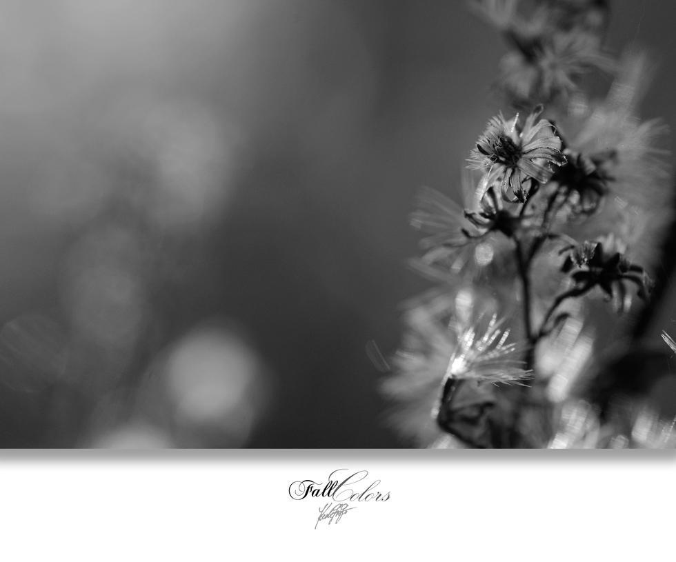 FallColors 05 by GregorKerle