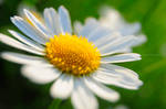 Spring-ing 036
