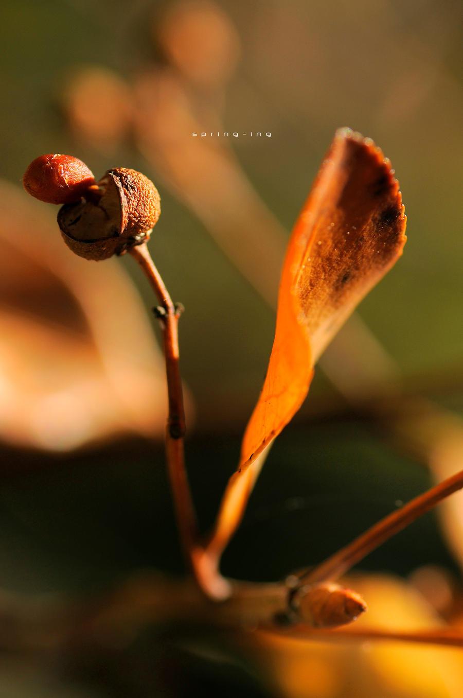 Spring-ing 041