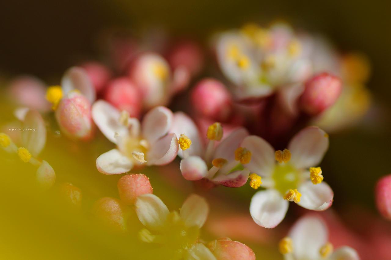 Spring-ing 044