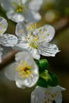 Spring-ing 052