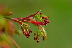 Spring-ing 053