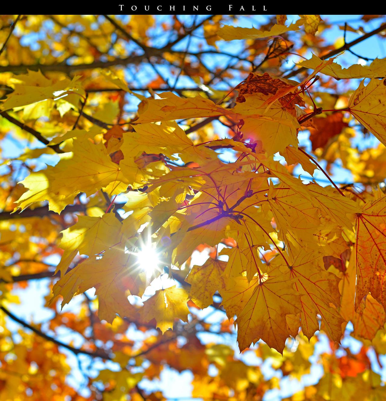 Touching Fall 10