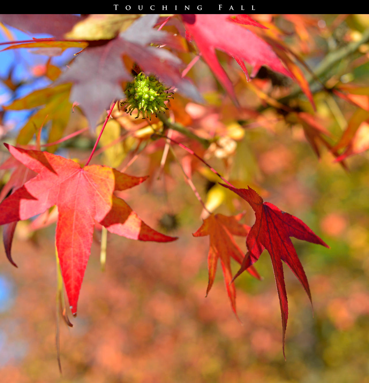 Touching Fall 11