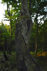 TreeSpirit 005