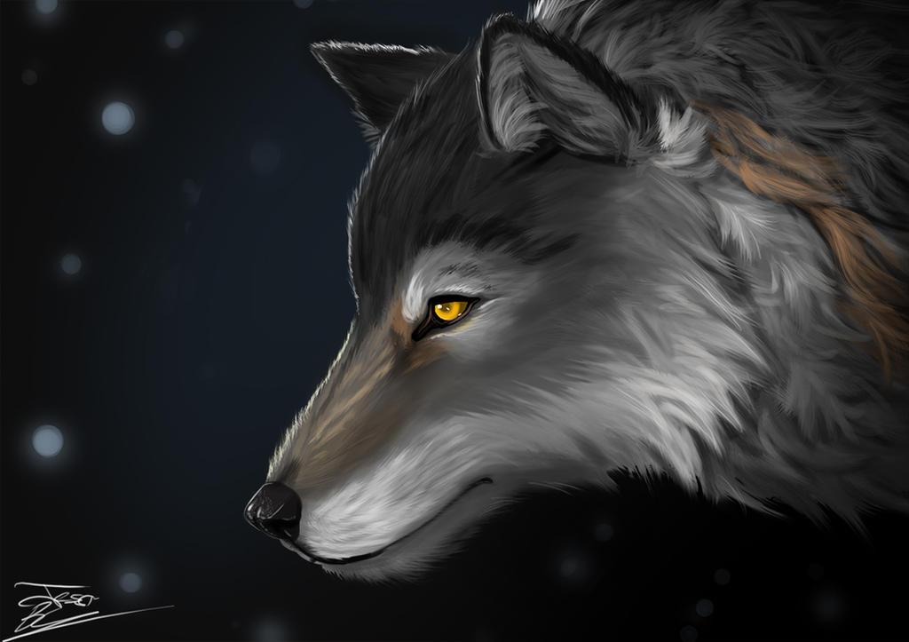 Wolf by Evilddragonqueen