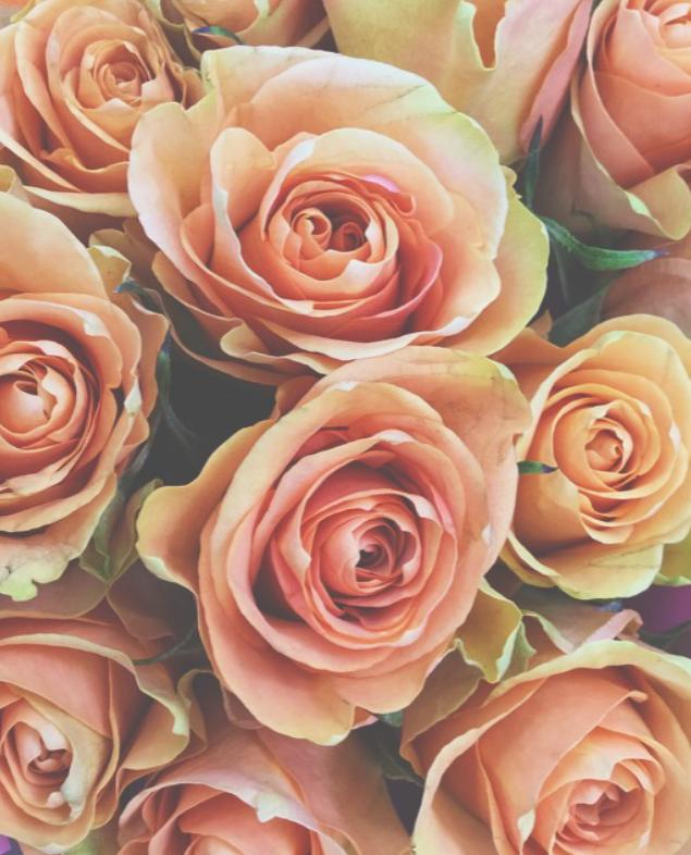 Peach Rose by viciousmischief