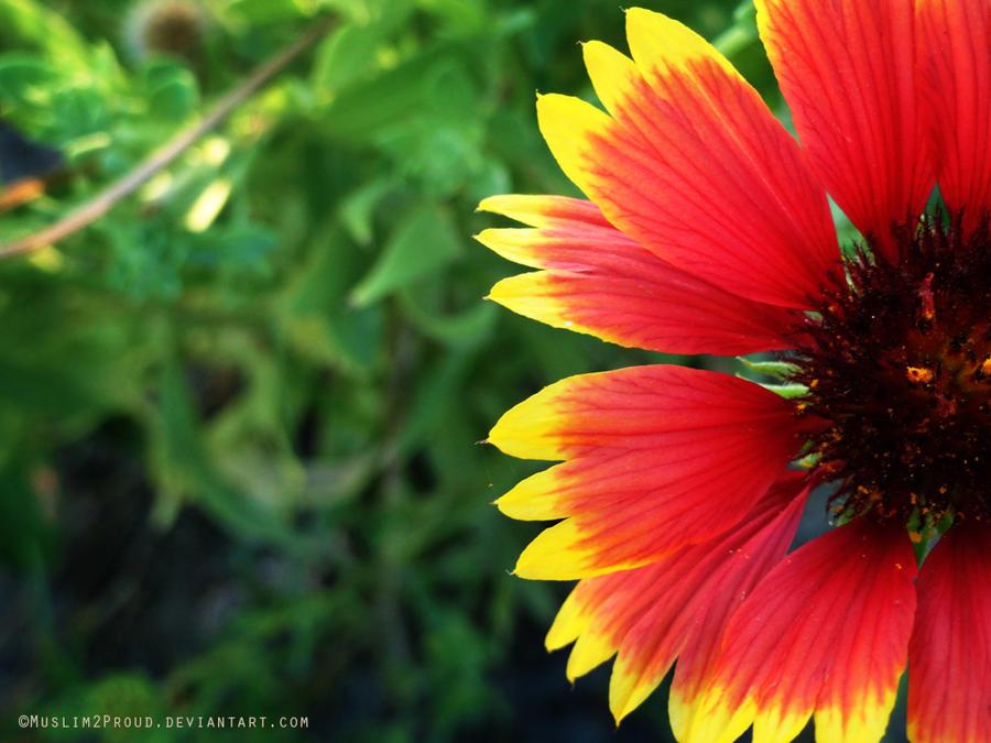 . . . Pinky Flower . . . by muslim2proud