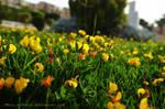 Flower Garden by muslim2proud