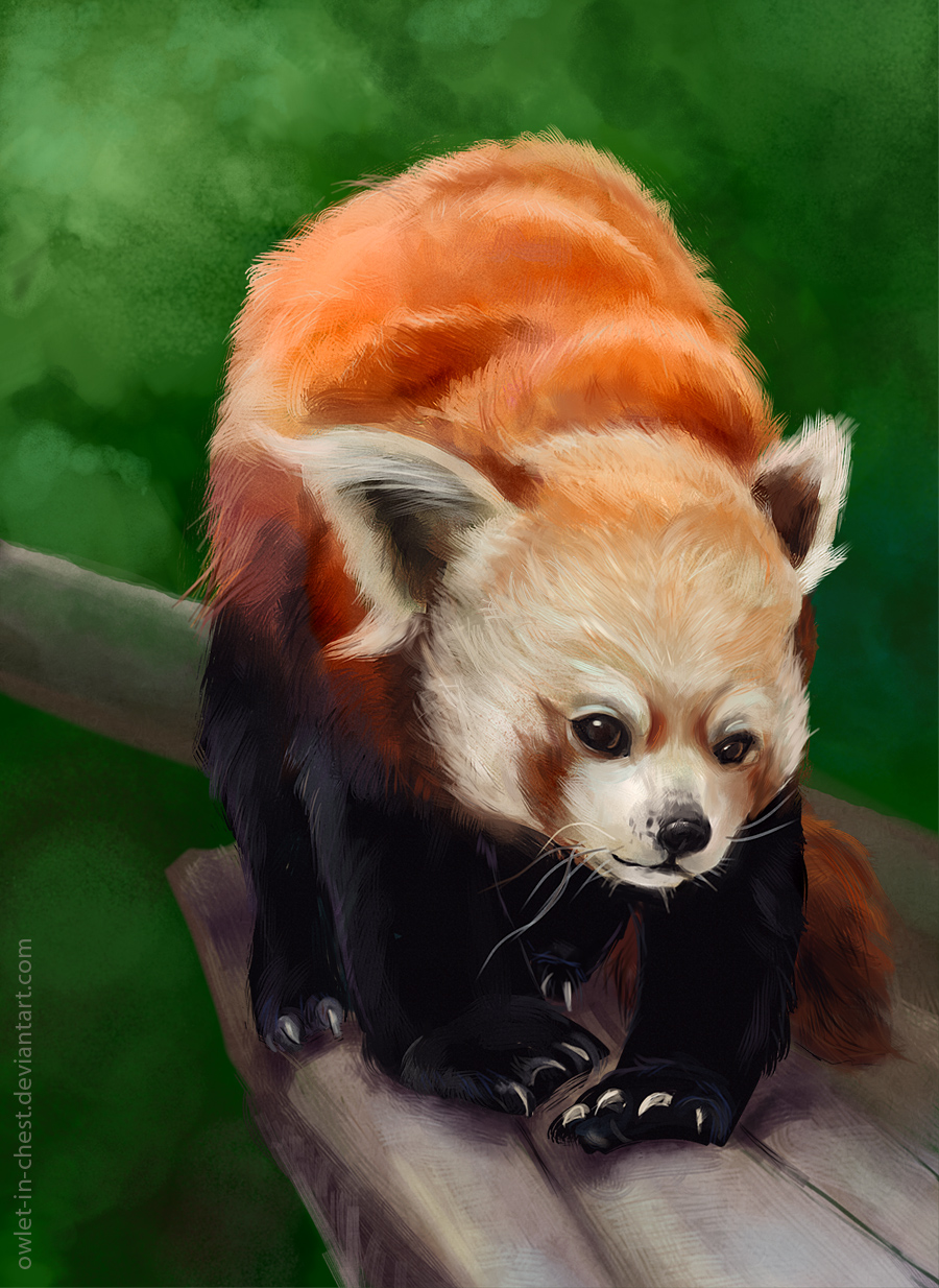Red panda by Owlet-in-chest