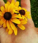 A Handful of Sunshine