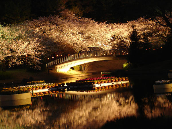Sakura by RyuADBrasil