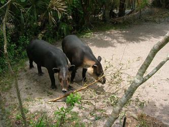 Tapir's by Wulfur