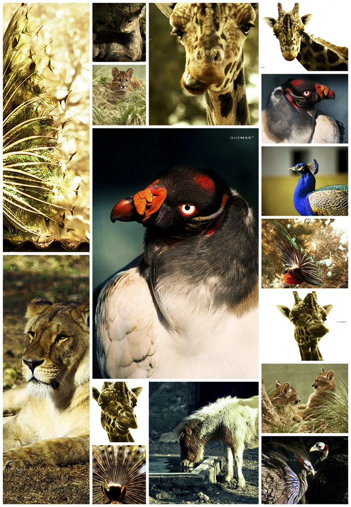 ZOO collage by quemas