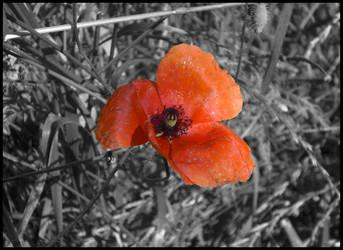 Old Flower 1 by Kitadashi