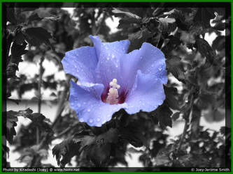 Old Flower 2 by Kitadashi