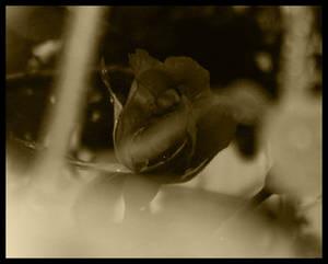 Old Flower 4