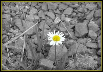 Old Flower 5 by Kitadashi