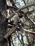 Kananskis Bird by ExtremeSi