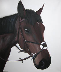 Horse Portrait by ExtremeSi