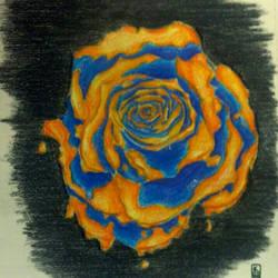 sloppy rose