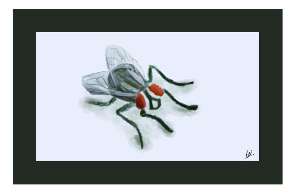 Fly by PsychoPath10