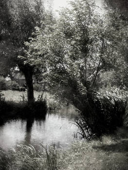 't Woudt with willows