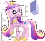 Pony of Vitruvio 5: Princess Cadance