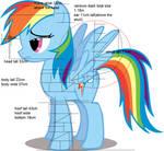Pony of Vitruvio 6: Rainbow Dash
