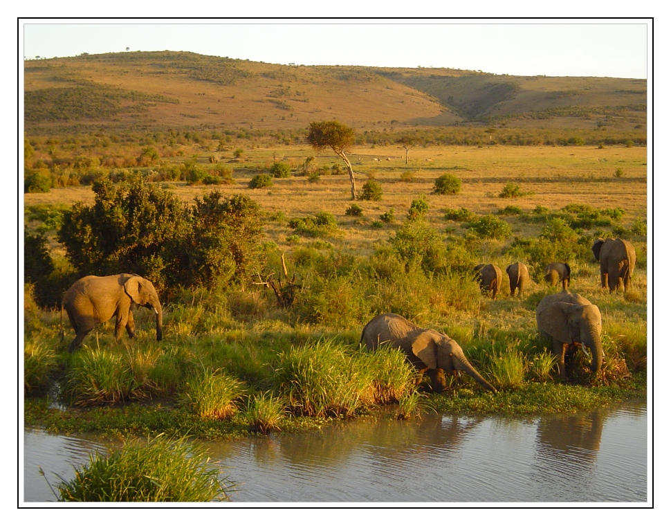 More elephants by IsaFortyThirty1