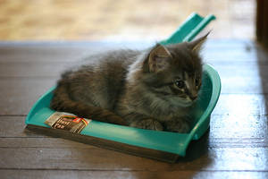 Dustpan Kitten by silentivy