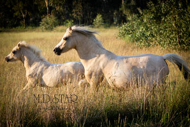 Eternity by MD-STAR