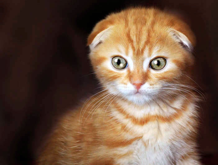 kitten by ElizavetaS