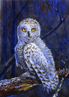 Northern owl by ElizavetaS