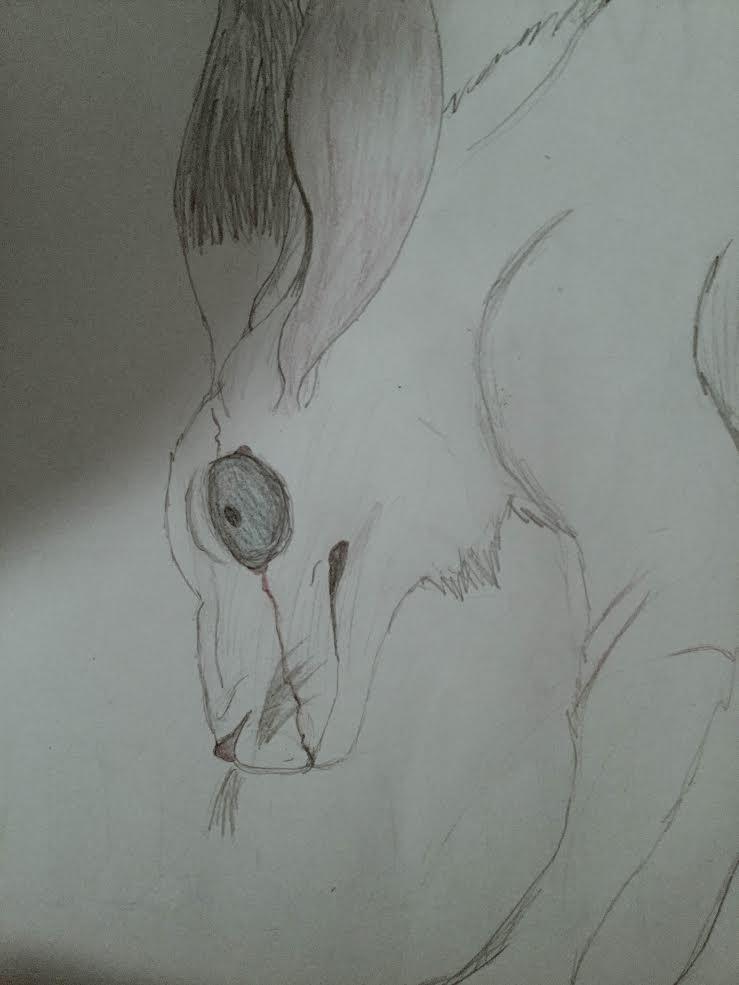 White Rabbit by One-EyedHawk