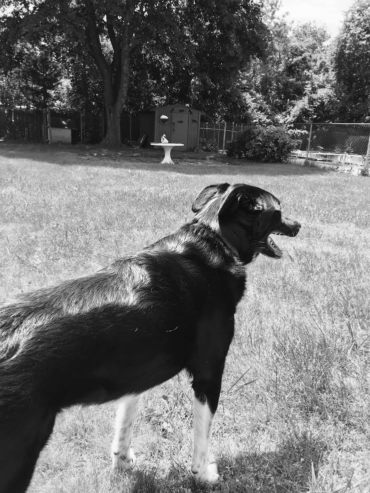 Watchdog by One-EyedHawk