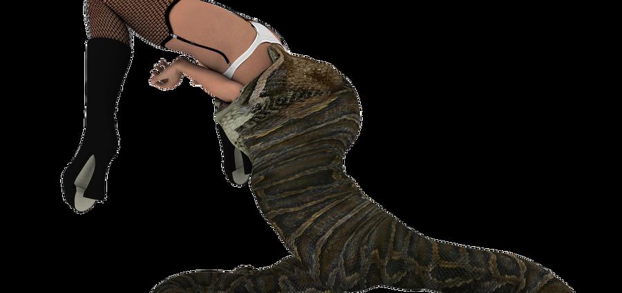 Lingerie snake vore 6 by swiftbladez