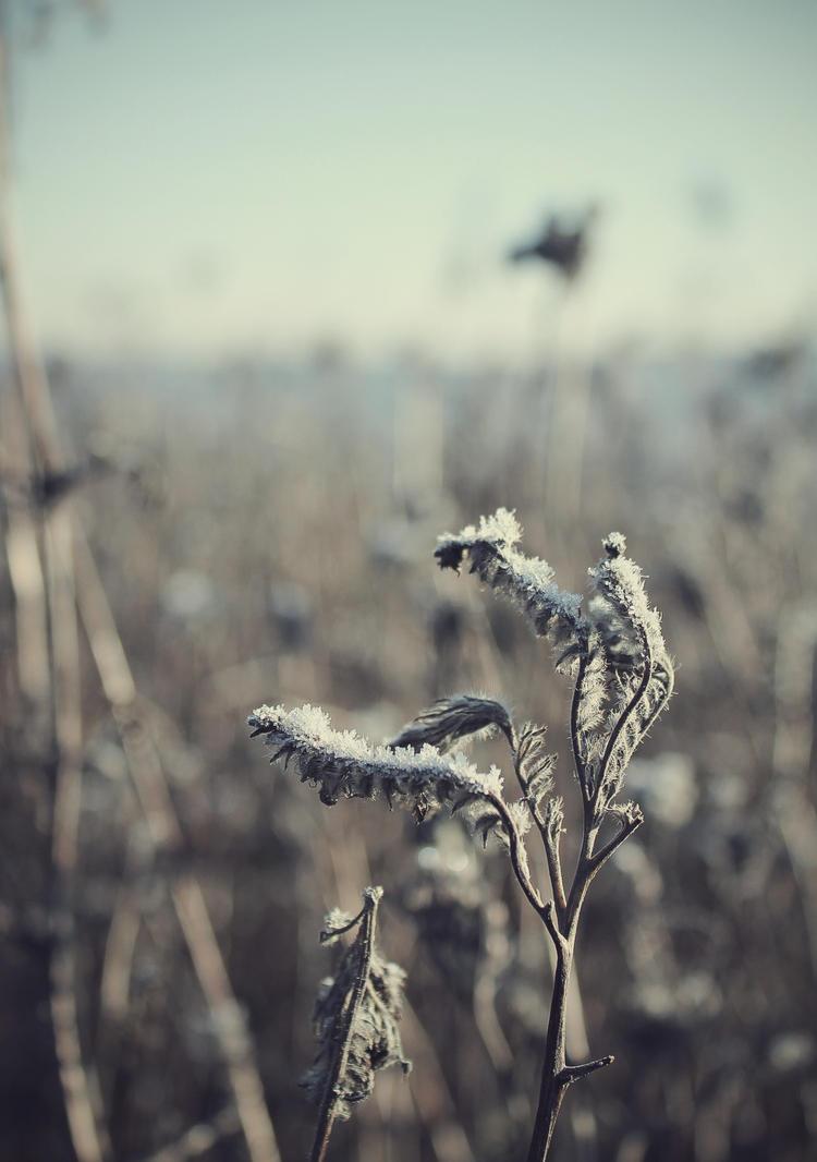 January Winter by LittleRudeGirl666